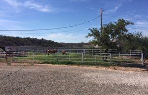Cottonwood-AZ-horse-boarding-pasture