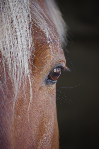 equine-therapy-cottonwood-arizona