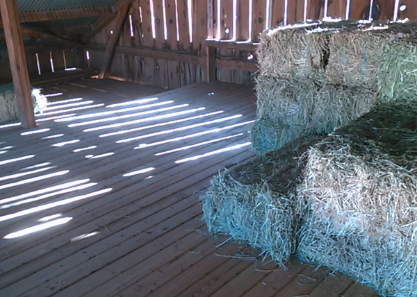 hay-for-sale